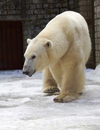 5e2bbfa0a5f Rahvusvaheline jääkarupäev Tallinna loomaaias